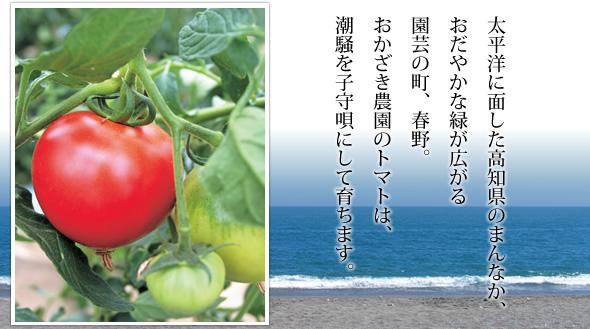 岡崎農園 食べるトマトジュース